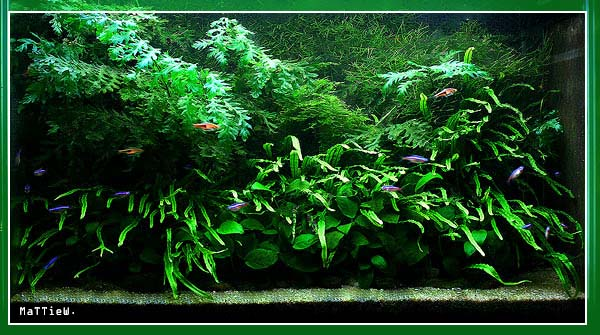 Planted Tank Web Site